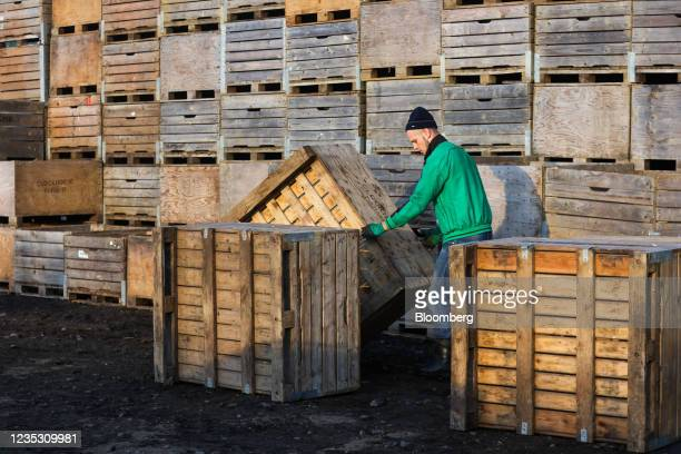 An employee arranges apple crates during a harvest at a farm in Coxheath, U.K., on Thursday, Sept. 16, 2021. The head of the U.K.'s biggest business...