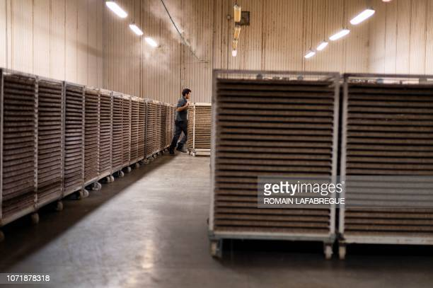 An employee arranges Ephestia kuehniella's boxes at Bioline AgroSciences site of LivronsurDrome near Valence central eastern France on December 11...