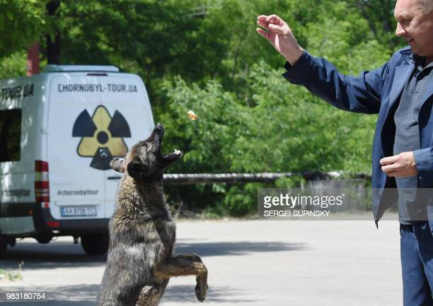 An employee feeds a stray dog near the Chernobyl nuclear power plant on June 8 2018 The restricted zone around Chernobyl is eerily quiet but one...