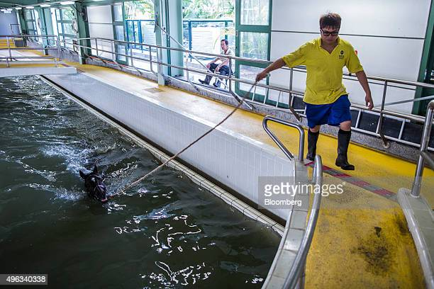 An employee guides a horse as it swims in an equine swimming pool at the Sha Tin Racecourse, operated by Hong Kong Jockey Club, in Hong Kong, China,...