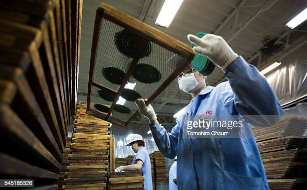 An employee holds a rack with mosquito coils at the Kishu Factory of Dainihon Jochugiku Co. Ltd. On July 6, 2016 in Arita, Japan. Japanese insect...