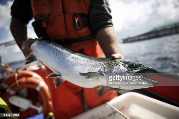 An employee holds a salmon at a marine fishery
