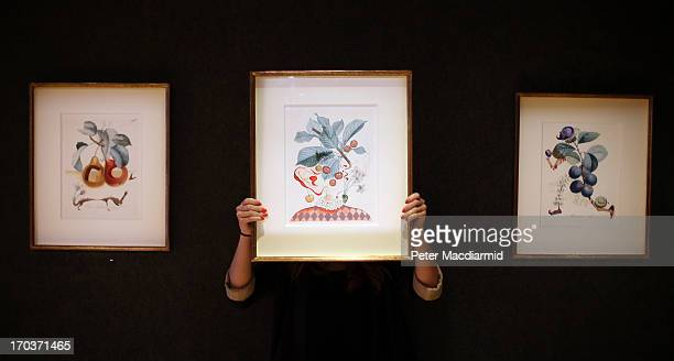 An employee holds Salvadore Dali's watercolour 'Cerises Pierrot' displayed with 'Fruits troués' and 'Prunier hâtif' by the same artist at Bonhams on...