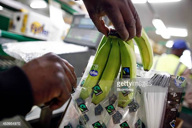 An employee inserts a bunch of Fyffes bananas into a fairtradebranded bag ahead of shipping from Fyffes Plc's banana ripening and fruit distribution...