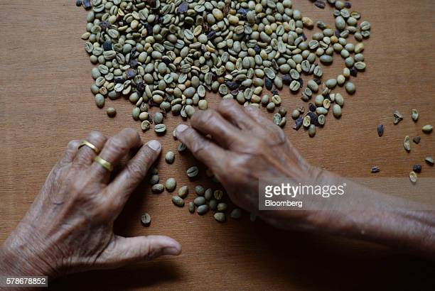 An employee inspects Arabica coffee beans at the Solok Radjo Cooperative coffee farm in Alahan Panjang West Sumatra Indonesia on Friday July 15 2016...