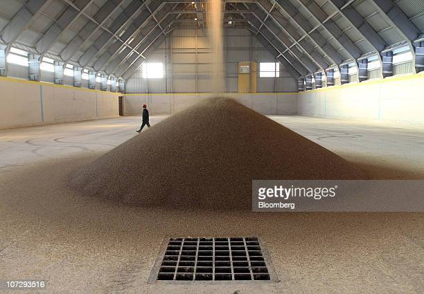 An employee is seen beside a pile of OAO Ammophos phosphate plant fertilizer while it is being poured into a storage facility at the OAO PhosAgro...