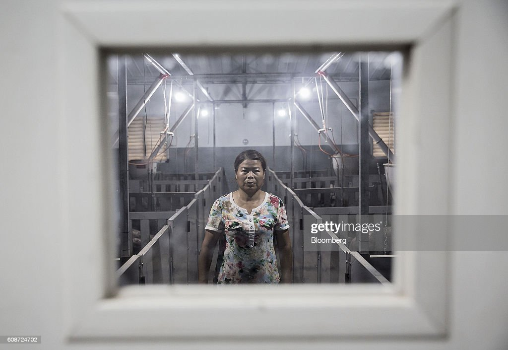 An employee is seen through a window as she walks past pig pens at the Jia Hua antibiotic-free pig farm in Tongxiang, China, on Thursday, Sept. 15, 2016. Hog farmer Shen Jian-Ping has spent 4.7 million yuan ($700,000) giving his swine roomier, better-ventilated digs and there are three full-time veterinarians to help keep the 465-sow herd healthy. Photographer: Qilai Shen/Bloomberg via Getty Images
