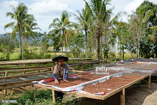 An employee lays out Arabica coffee beans for drying at the Solok Radjo Cooperative coffee farm in Alahan Panjang West Sumatra Indonesia on Friday...