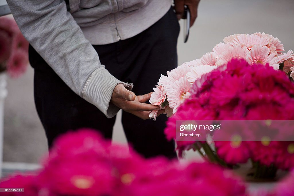 An employee loads gerbera flowers onto a truck at the Dramm & Echter growing facility in Encinitas, California, U.S., on Tuesday, Nov. 12, 2013. The U.S. Census Bureau is scheduled to release wholesale inventories figures on Nov. 15. Photographer: Sam Hodgson/Bloomberg via Getty Images