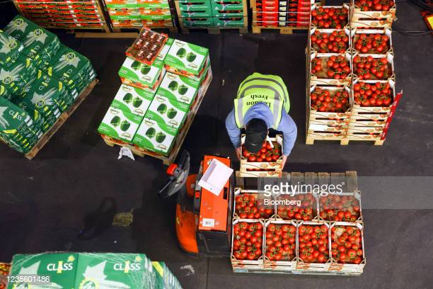An employee loads tomatoes on to a pallet in the Buyers Walk at New Covent Garden Market wholesale market in London, U.K., on Thursday, Sept. 30,...