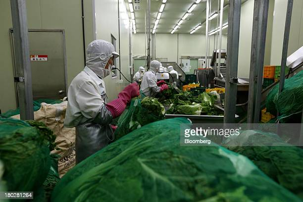 An employee moves a sack of cabbage at the Gamchilbaegi Co kimchi factory in Gwangju South Korea on Tuesday Sept 10 2013 Gross domestic product rose...