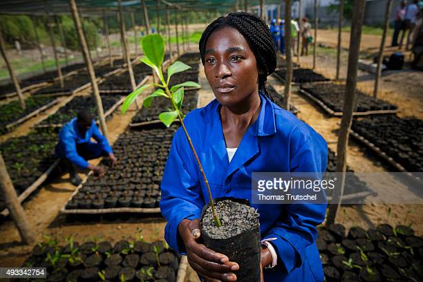 An employee of a mangrove nursery in Beira controls a Seedling on September 28 2015 in Beira Mozambique