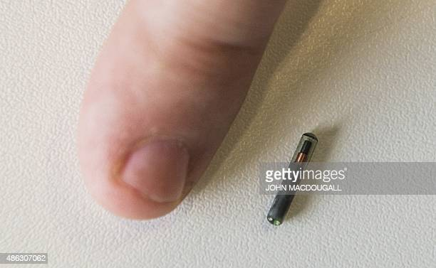 An employee of internet security company Kaspersky Lab shows a microchip for subcutaneous implants during a Kaspersky Lab press conference on...