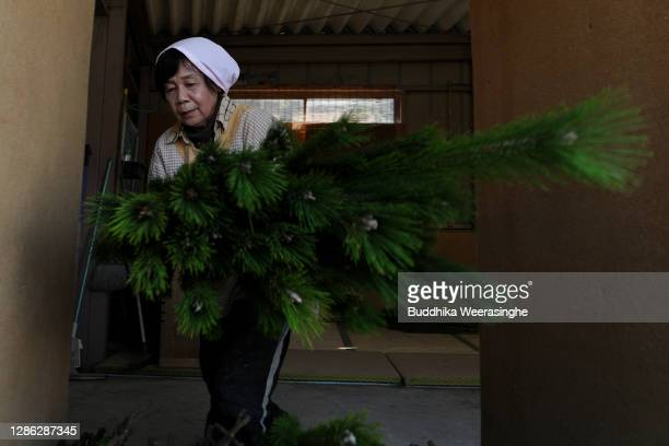 An employee of Nagomi Farm gathers bundles of freshly harvested three-year-old Wakamatsu trees on a production line as they are prepared for shipping...