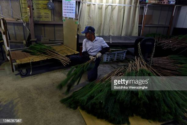 An employee of Nagomi Farm sorts freshly harvested three-year-old Wakamatsu trees on a production line as they are prepared for shipping on November...