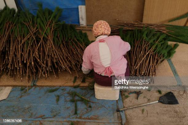 An employee of Nagomi Farm sorts of freshly harvested three-year-old Wakamatsu trees on a production line as they are prepared for shipping on...