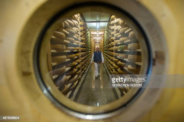 An employee of the Comte cheese ripening firm Rivoire et Jacquemin walks through cheese in the maturing cellar on march 10 2015 in Montmorot eastern...