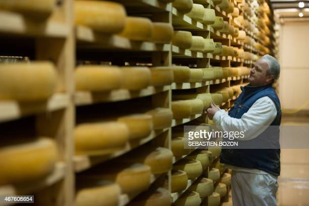 An employee of the Comte cheese ripening firm Rivoire et Jacquemin controls Comte tommes in the maturing cellar on march 10 2015 in Montmorot eastern...