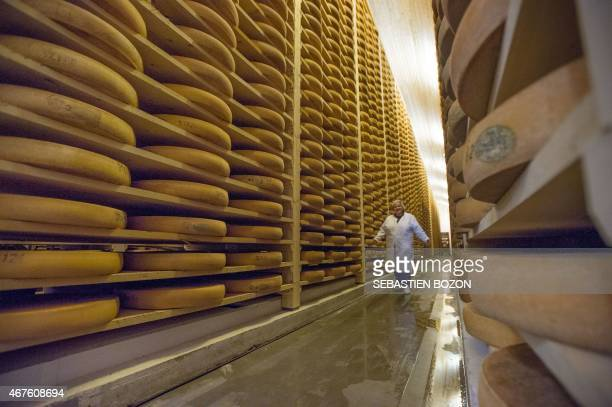An employee of the Comte cheese ripening firm Rivoire et Jacquemin walks between Comte tommes in the maturing cellar on march 10 2015 in Montmorot...