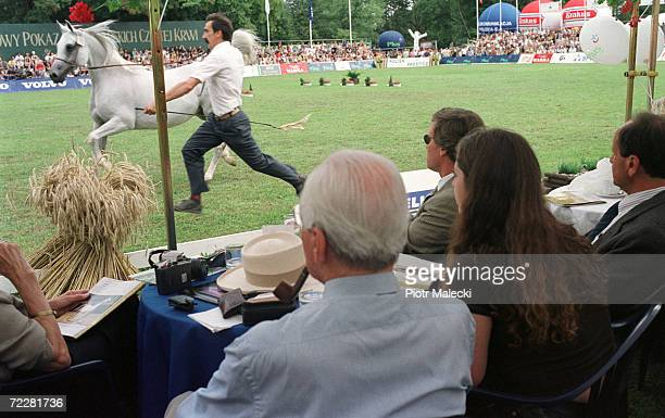 An employee of the Janow Podlaski stable presents a horse at the annual world famous horse auction August 12 2000 in Janow Podlaski Poland The...
