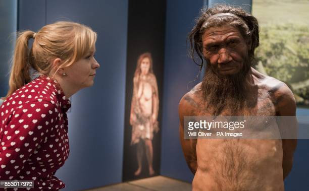 An employee of the Natural History Museum in London looks at model of a Neanderthal male in his twenties, which on display at the museums 'Britain:...