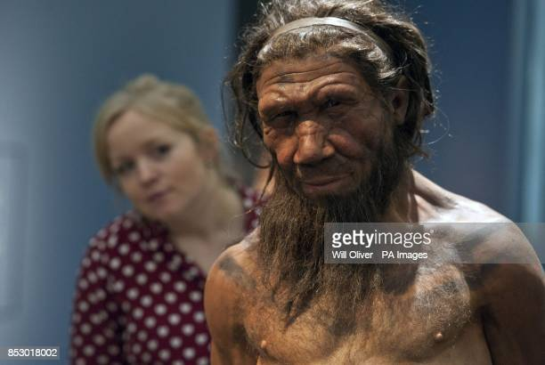 An employee of the Natural History Museum in London looks at model of a Neanderthal male in his twenties, which is on display at the museum's...