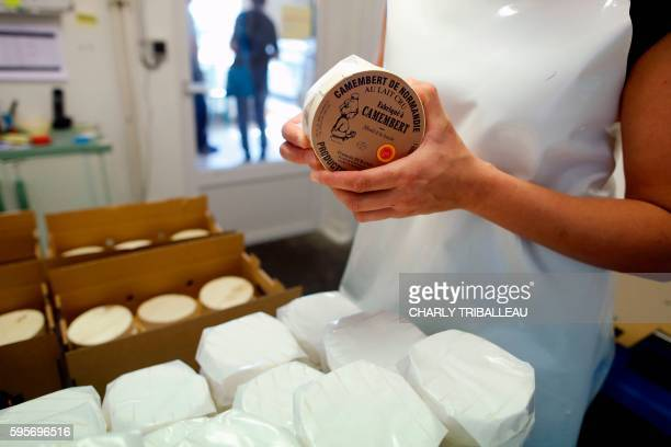 An employee packs camembert cheeses in an haloir of the cheese factory on August 24 2016 at the Fromagerie Durand in the Normandy's village of...