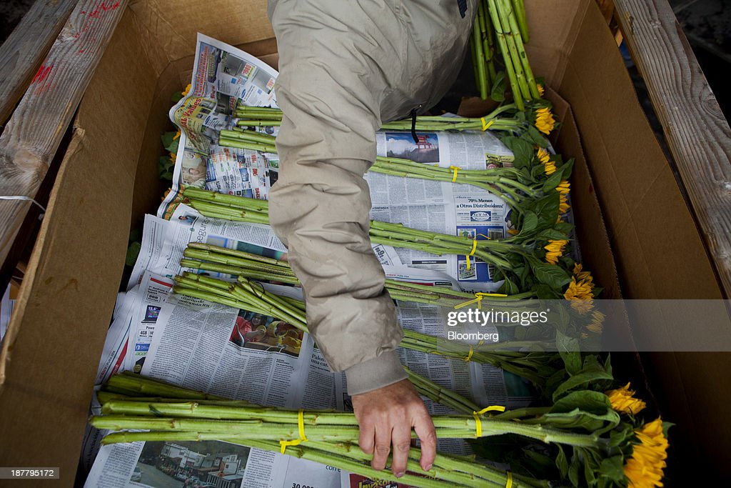 An employee packs sunflowers for shipment at the Dramm & Echter growing facility in Encinitas, California, U.S., on Tuesday, Nov. 12, 2013. The U.S. Census Bureau is scheduled to release wholesale inventories figures on Nov. 15. Photographer: Sam Hodgson/Bloomberg via Getty Images