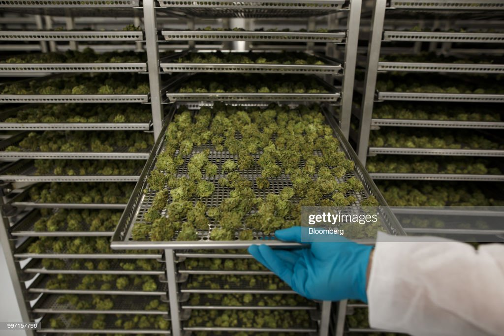 An employee pulls out a tray of drying cannabis buds at the CannTrust Holding Inc. Niagara Perpetual Harvest facility in Pelham, Ontario, Canada, on Wednesday, July 11, 2018. Canadian pot stocks have had a wild ride in the past year with the BI Canada Cannabis Competitive Peers Index surging about 250 percent from October to December as the road to legalization became clearer in Canada, before dropping by about 36 percent this year. Photographer: Cole Burston/Bloomberg via Getty Images