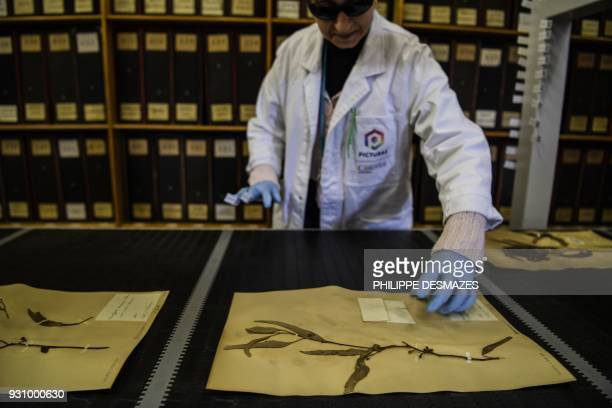 An employee puts herbarium paper sheets on a conveyer belt on their way to be digitalizated on March 12 2018 at the Claude Bernard LyonI university...