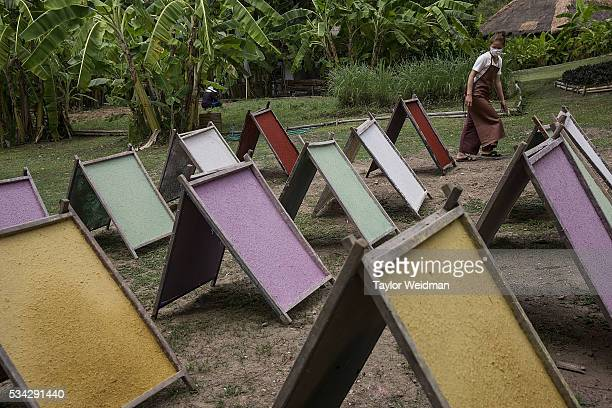 An employee sets out sheets of elephant dung paper to dry at Elephant 'PooPooPaper' Park on May 24 2016 in Mae Rim Thailand Elephant 'PooPooPaper'...