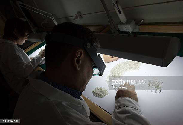 An employee sorts through a large collection of rough diamonds on a sorting table at the Yakutsk Diamond Trading Enterprise operated by Alrosa PJSC...