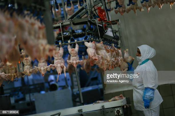 An employee stands next to racks of chicken in a factory in Izmir province of Turkey on June 18 2017 The value of chicken meat exported from Turkey...