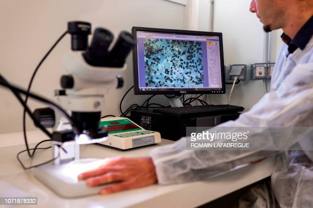 An employee studies trichogramma 's eggs at Bioline AgroSciences site of LivronsurDrome near Valence central eastern France on December 11 2018...