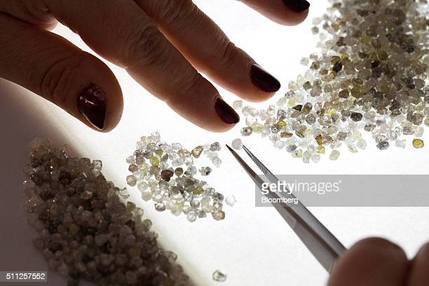 An employee uses tweezers to sort through a large collection of rough diamonds on a sorting table at the Yakutsk Diamond Trading Enterprise operated...