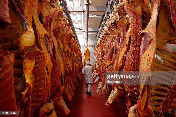 An employee walks through a cold room filled with cattle carcasses at a Bindaree Beef Ltd facility in Inverell Australia on Thursday March 24 2016...