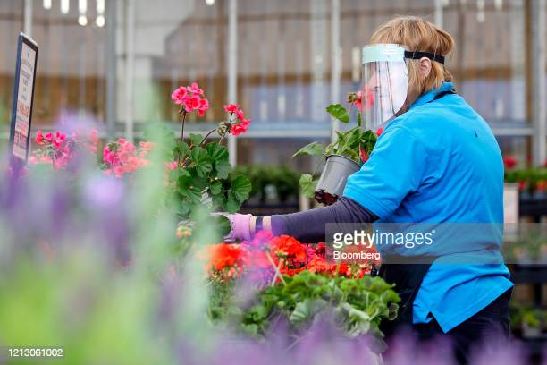 An employee wearing a protective face mask arranges a display of plants at the Grosvenor Garden Centre operated by Blue Diamond Ltd in Belgrave UK on...