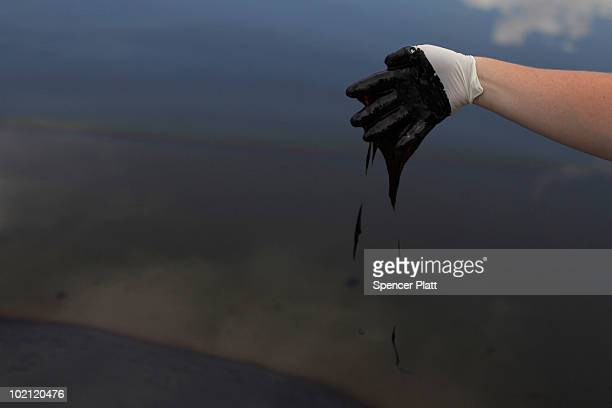 An employee with the governor's office collects oil for research purposes in Bay Jimmy on June 15 2010 off of Grand Isle Louisiana The BP spill has...