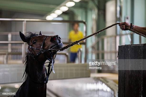 An employees guides a horse out of an equine swimming pool at the Sha Tin Racecourse, operated by Hong Kong Jockey Club, in Hong Kong, China, on...