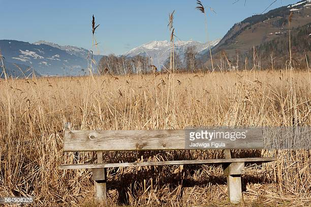 An empty park bench made of wood on dry grass