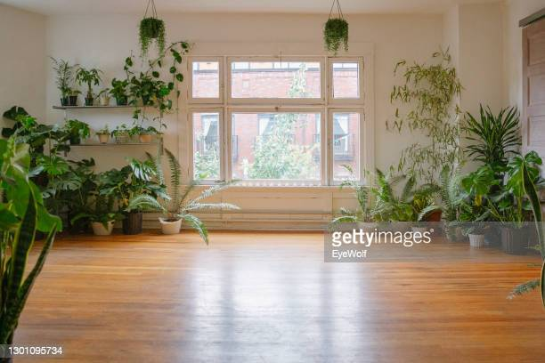 an empty studio space surrounded by plants - yoga studio stock pictures, royalty-free photos & images