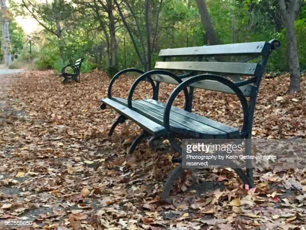 An empty wood bench in a public park surrounded by fallen leaves