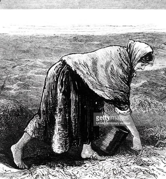An engraving commenting on famine in Ireland a woman collects seaweed for food on the west coast Dated 19th century