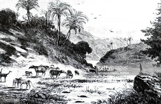 An engraving depicting an imaginary landscape during the Tertiary period showing groups of Palaeotheria and Anoplotherium Dated 19th century