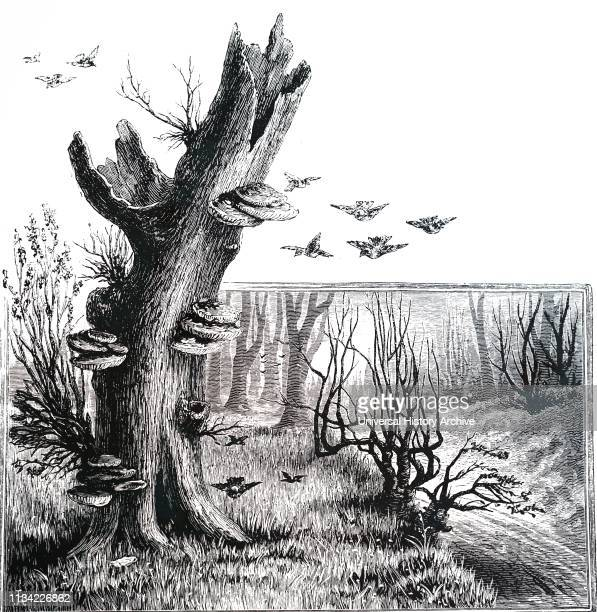 An engraving depicting Bracket fungi on a dead tree. 1886 .