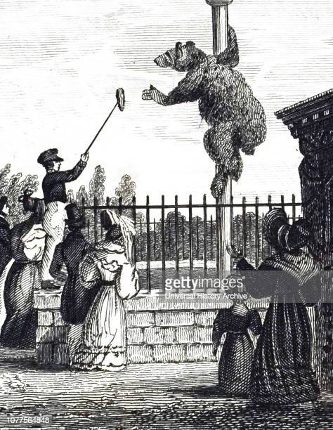 An engraving depicting the Bear Pit in the Royal Zoological Society's Gardens Regent's Park London Dated 19th century