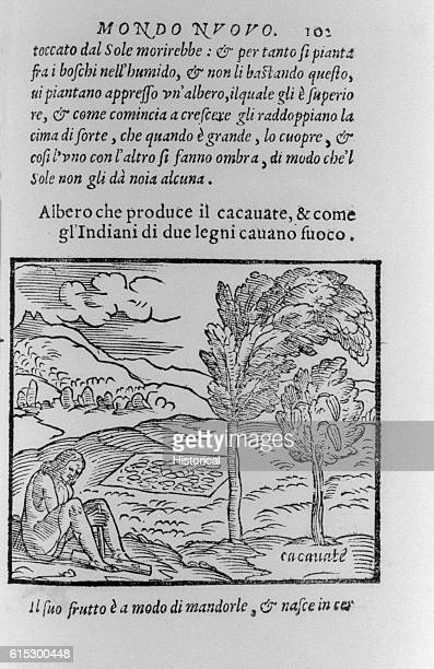 An engraving from La Historia del Mondo Nuovo by Benzoni shows a native picking and processing cacao pods A number of the pods are drying on a piece...