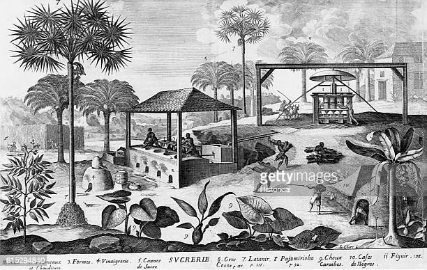 An engraving of a sugar plantation in the West Indies in the 17th century with indigenous workers being directed by plantation supervisor