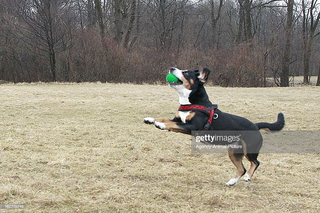 Dog Training : News Photo