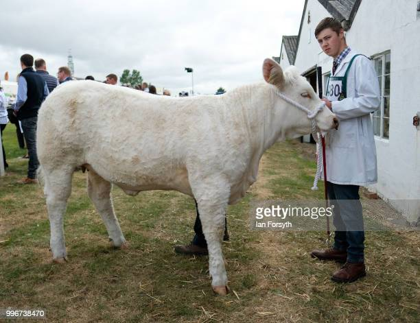 An entrant waits with his bull before competing during the 160th Great Yorkshire Show on July 10 2018 in Harrogate England First held in 1838 the...